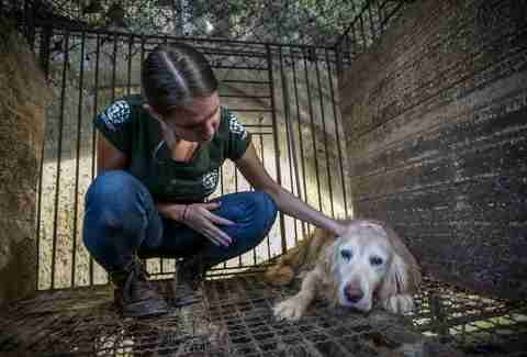 woman pets Golden retriever in meat farm