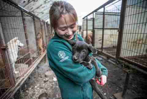 Rescuer holds a puppy in a dog meat farm