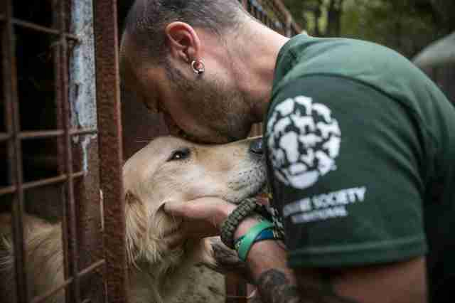 HSI rescuer kisses meat farm dog in South Korea