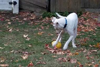 Adam playing in the yard
