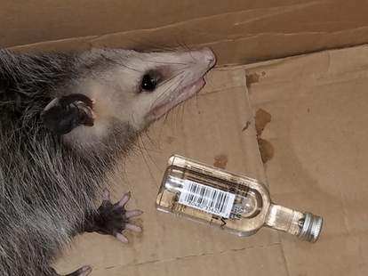 possum whiskey