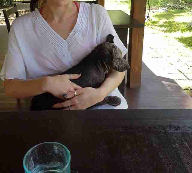 Woman holding sick Balinese dog at restaurant