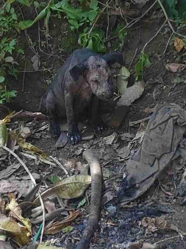 Sick, scared Bali dog hiding in a garden in Indonesia