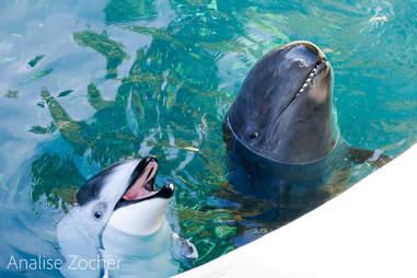 lonely dolphin vancouver aquarium