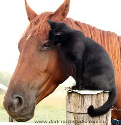 cat and horse best friends