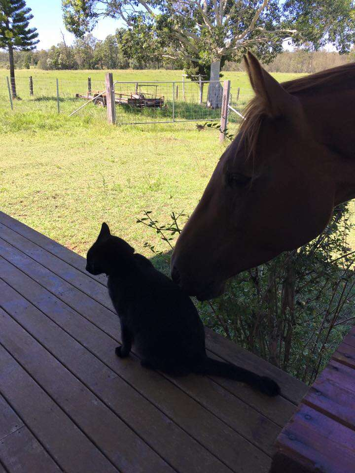 horse and cat best friends