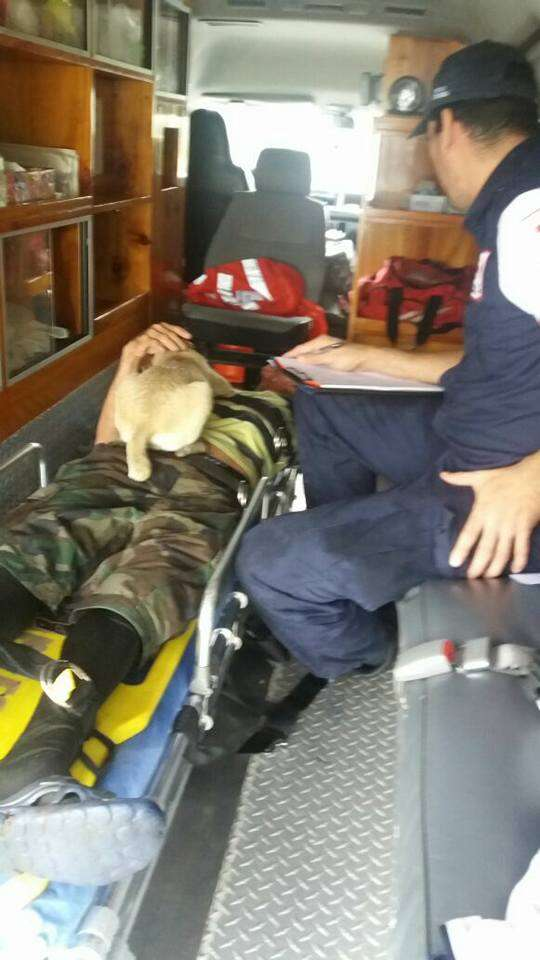 Dog lying on top of owner in ambulance