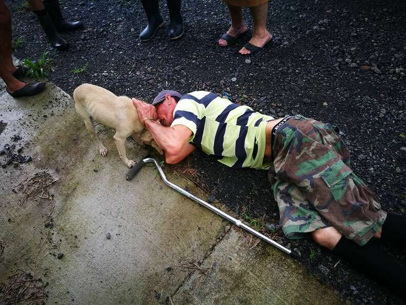 Dog with injured owner lying on ground