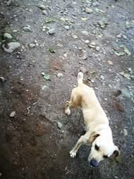Little dog standing on muddy ground