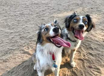 blind dog and her sister
