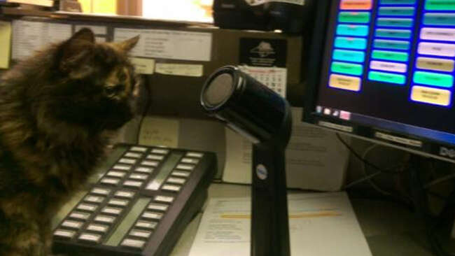 lost kitten north carolina