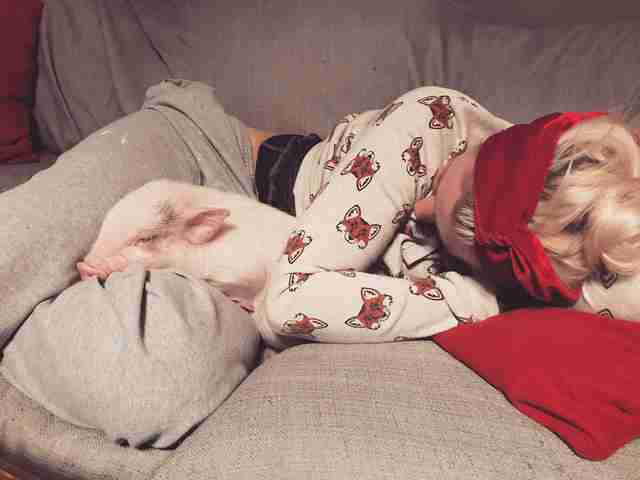 Woman snuggling with rescued piglet on couch