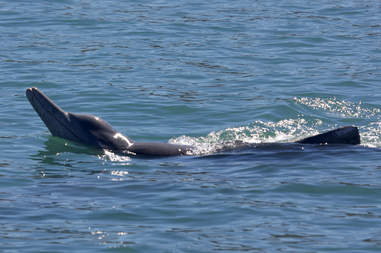 dolphin sea sponge gift australia