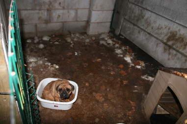 puppy farm breeder