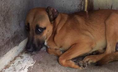 neglected dog rescue florida