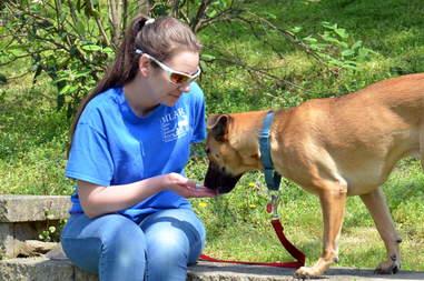 shy dog rehabilitation