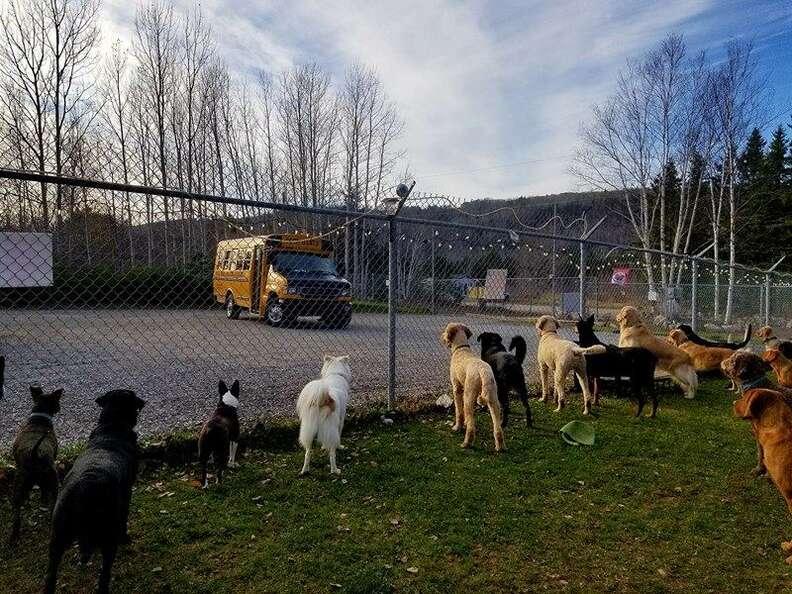 dogs wait for school bus