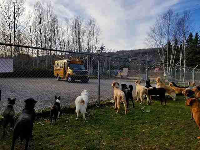 dogs wait for school bus