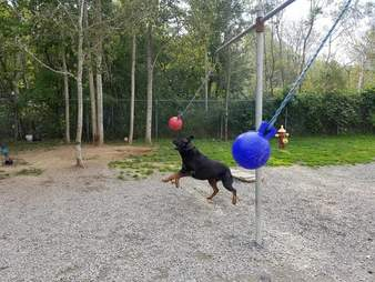 dogs playing tetherball