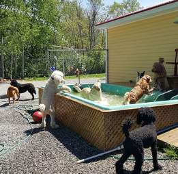 dogs in a swimming pool