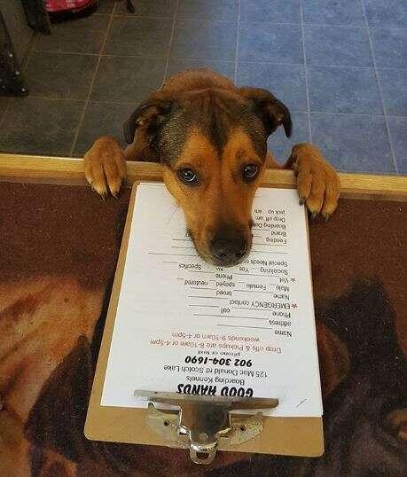 dog at doggy day care