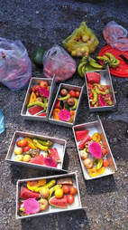 Fruit bought for bears during the journey to sanctuary