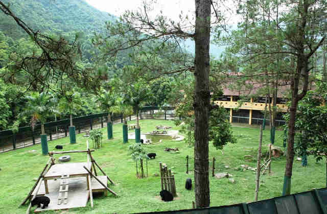 Bear sanctuary in Vietnam