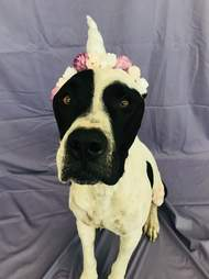 petey dog chews life rescue