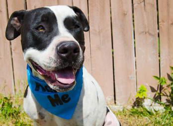petey chews life dog rescue