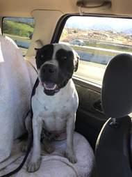 petey in the car