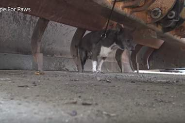 injured dog rescued