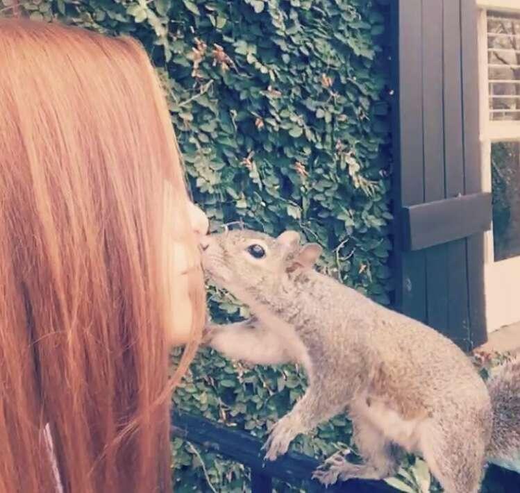 rescued squirrel