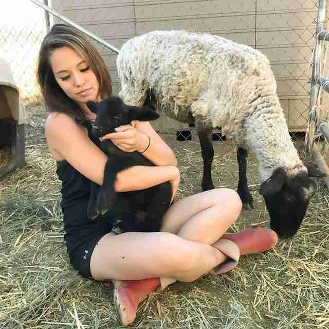 sheep mom and baby rescue california slaughterhouse