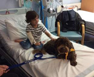 puppy farm rescue dog is now a therapy dog