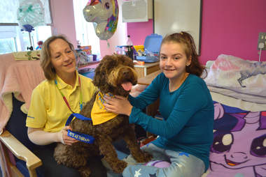 puppy farm rescue dog is a therapy dog now