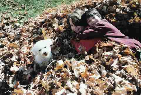 Lily and brother Zack in a leaf pile with bichon frise, Taco
