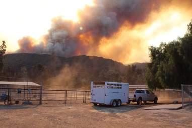 california fire animal rescue