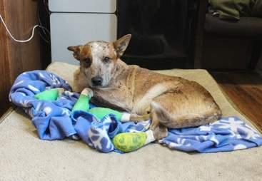 california fire animal rescue donate