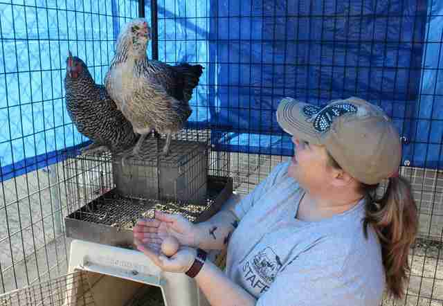 california fire animal rescue chickens