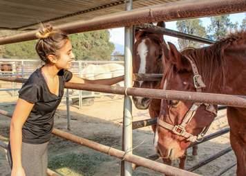 california fire animal rescue horse