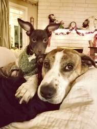 loki and noel dogs