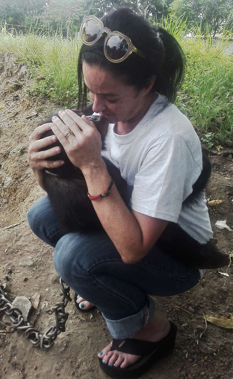 Chimp being held by her rescuer
