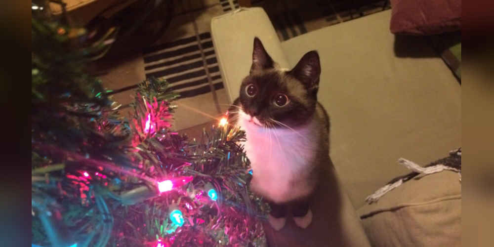 - How To Keep Your Cat Out Of The Christmas Tree - The Dodo