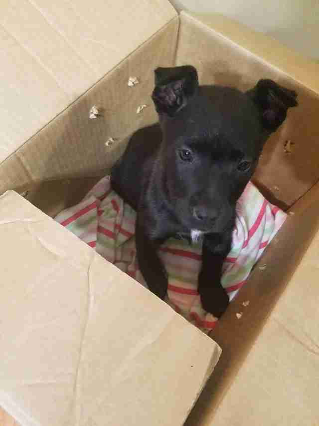 Abandoned puppy inside cardboard box