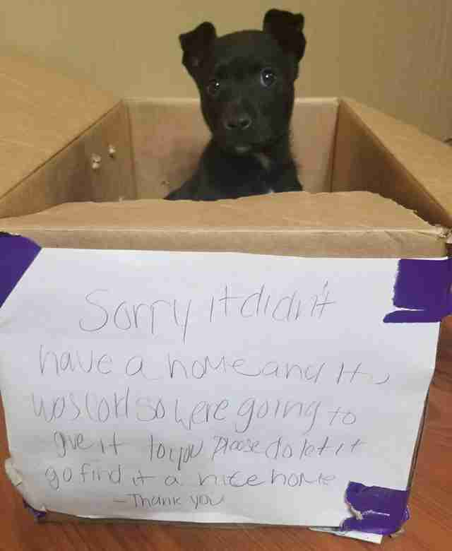 Abandoned puppy inside of cardboard box