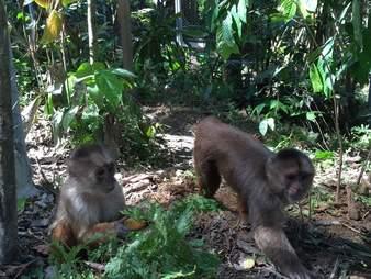 Rescued monkeys in rainforest habitat