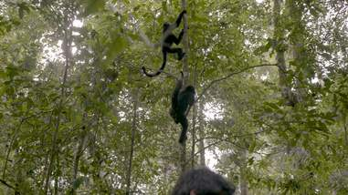 Rescued monkeys returned to the wild
