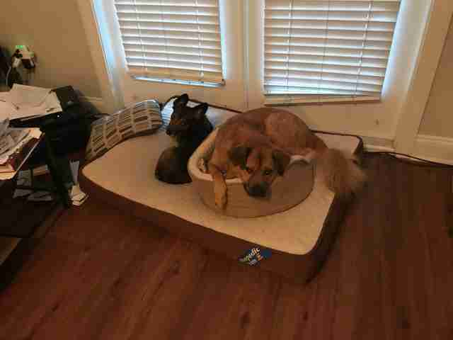 dog makes one giant dog bed