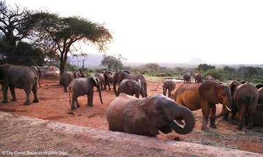orphaned elephants rescue calf babies