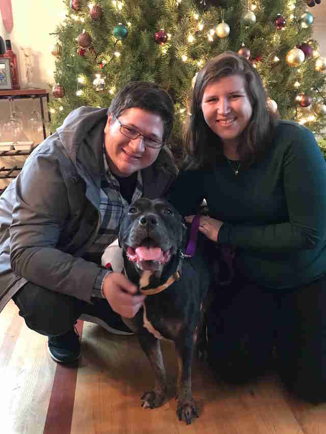 Black pit bull gets forever home for holidays